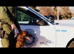 denver k9-unit-crimeshop.jpg