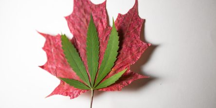 Canada-legal-weed-crimeshop
