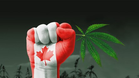 cannabis-shortage-in-Canada-crimeshop