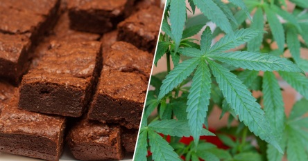 Funeral-In-Germany-Ends-On-A-High-As-Hash-Cake-crimeshop.jpg